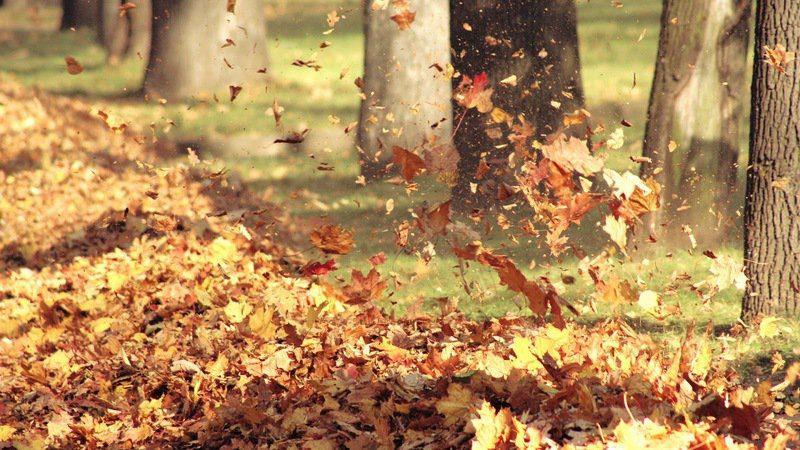 folhas ao vento-thumb-800x450-118712
