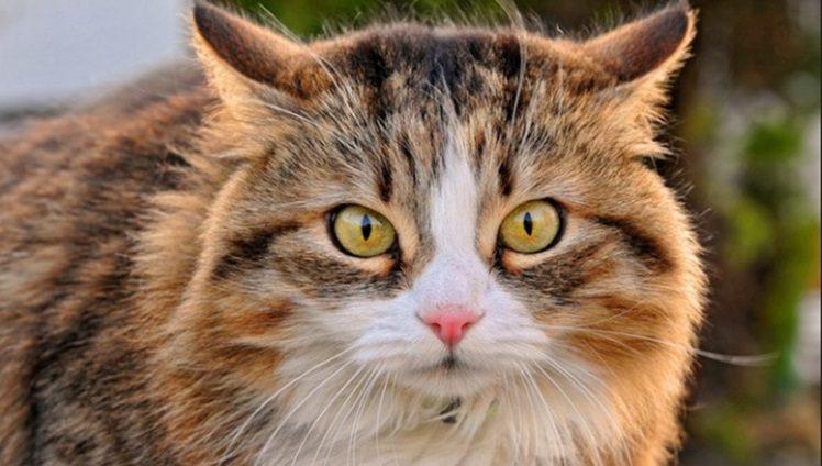 gato pronto para atacar