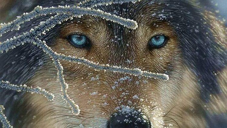 o lobo dos meus vazios