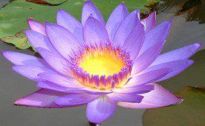10 símbolos espirituais2