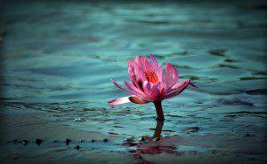 flor de lótus3