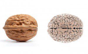 a aparência dos alimentos é igual aos órgãos3