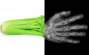 a aparência dos alimentos é igual aos órgãos4