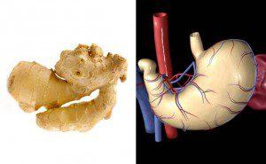 a aparência dos alimentos é igual aos órgãos9