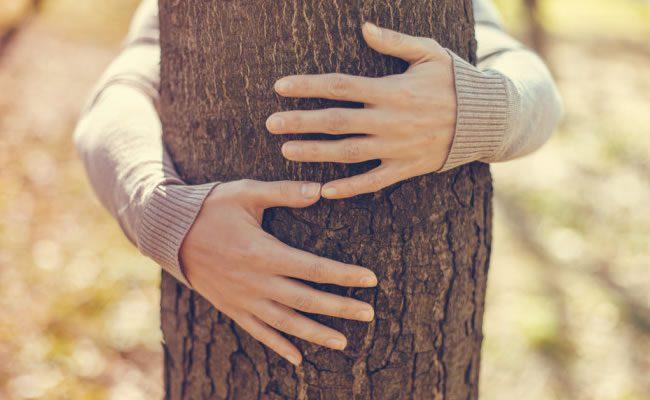 abraçar árvores foi oficialmente validado pela