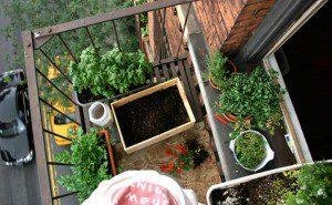 como fazer uma horta orgânica2