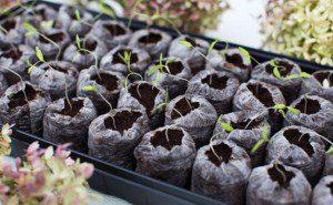 como fazer uma horta orgânica3