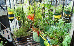 como fazer uma horta orgânica4