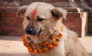 este festival anual no nepal2