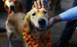 este festival anual no nepal5