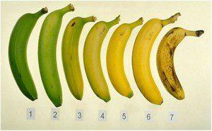 qual destas bananas é melhor