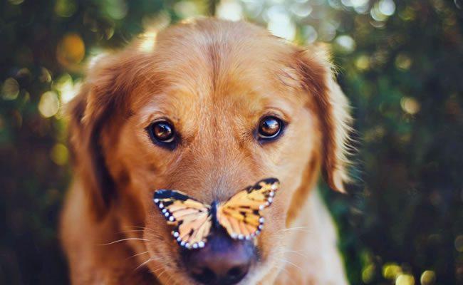 10 razões para brincar com cães todos os dias