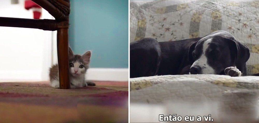 gato adotado