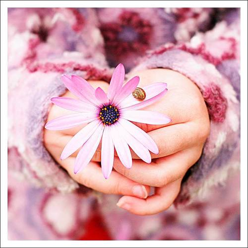 Flor em maos-miniatura-500x500-134839