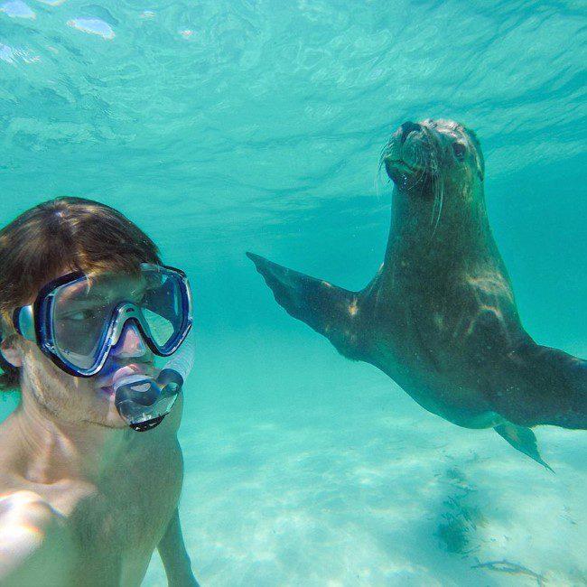 selfie-com-animais-10