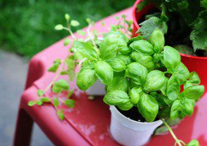5 alimentos que você pode replantar várias6