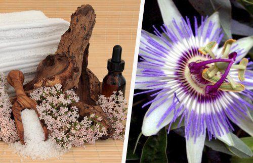 valeriana-passiflora-500x323-500x323