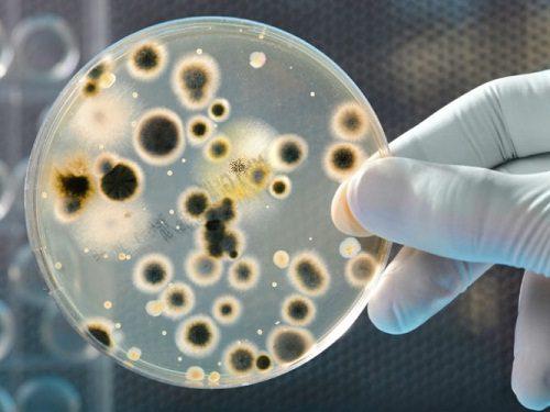 Bacterias2