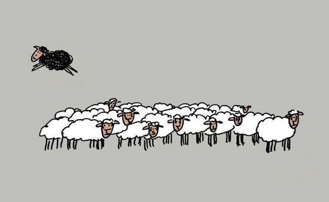 a ovelha negra não é