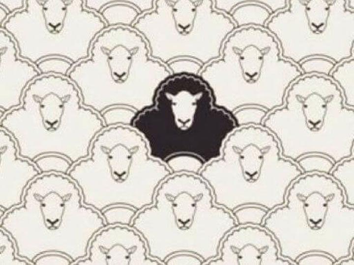 a ovelha negra não é2