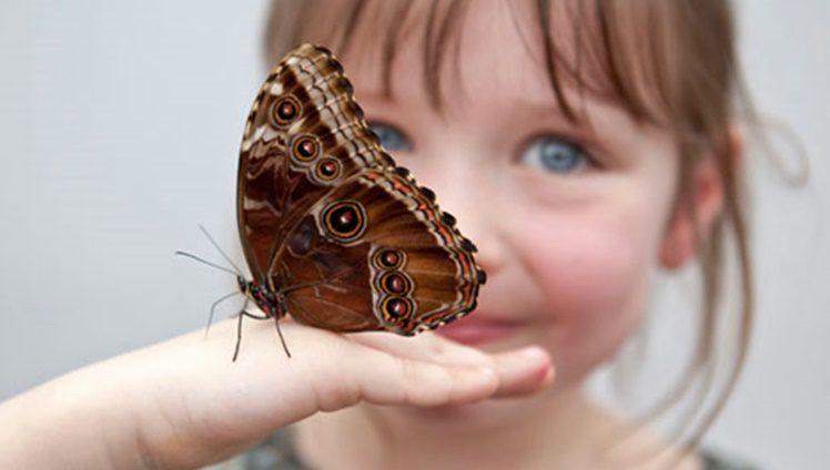 butterfly release girl