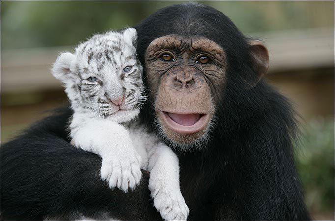 até que você ame um animal4