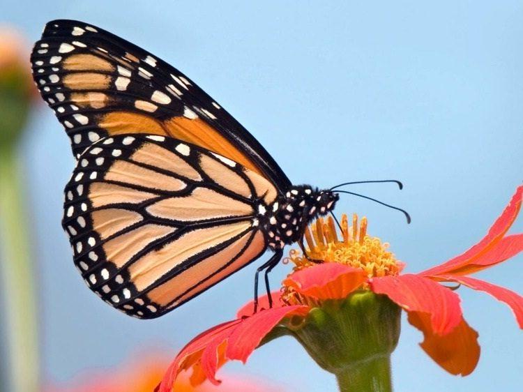 você vê borboletas2