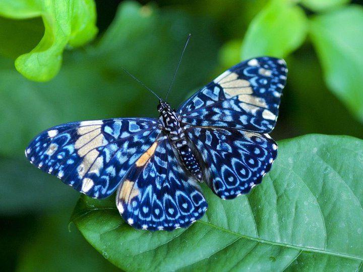 você vê borboletas3