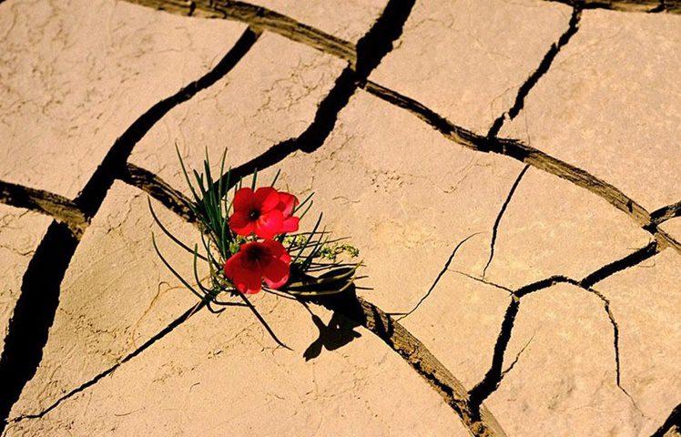 RESILIENCIA FOTO O1