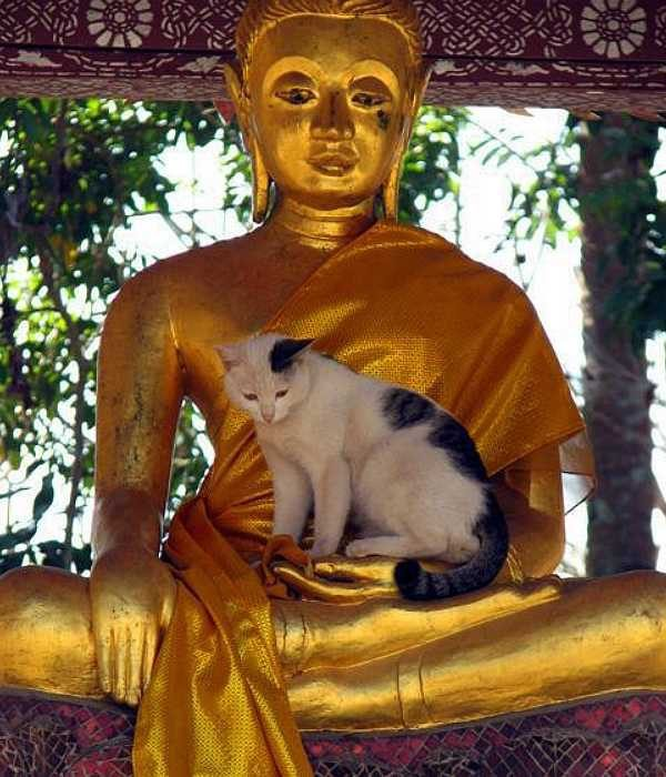 a lenda budista2