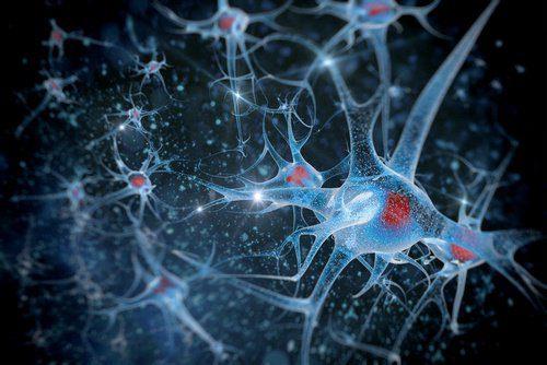 neuronios_cerebro
