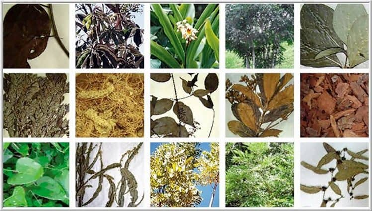 15-plantas-foto-de-capa-e-foto-de-dentro