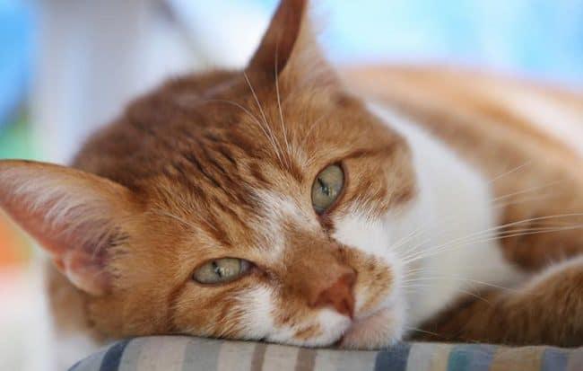 gatos-foto-02
