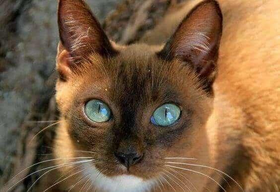 os-olhos-de-um-animal-foto-01