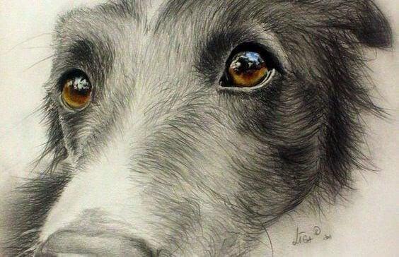 os-olhos-dos-animais-foto-03
