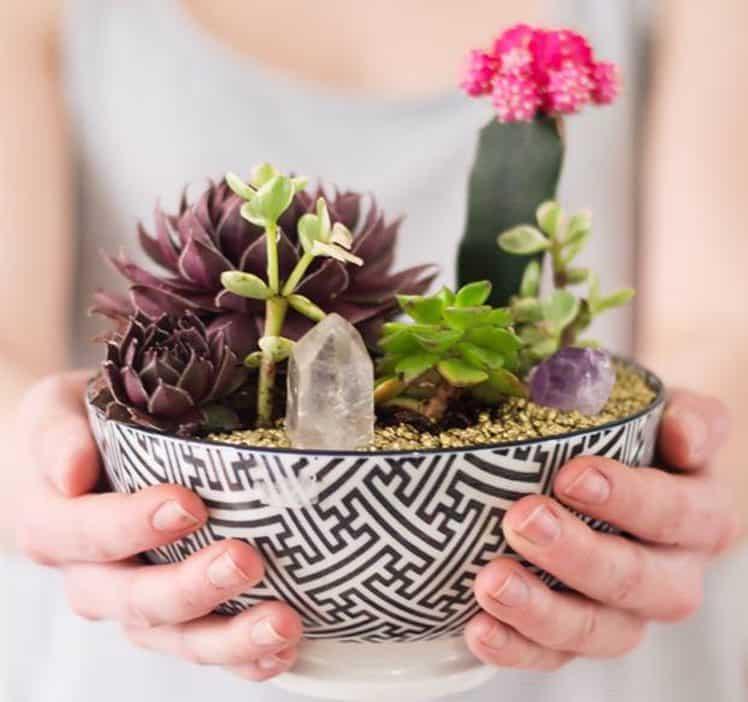 plantas-em-casa-foto-01