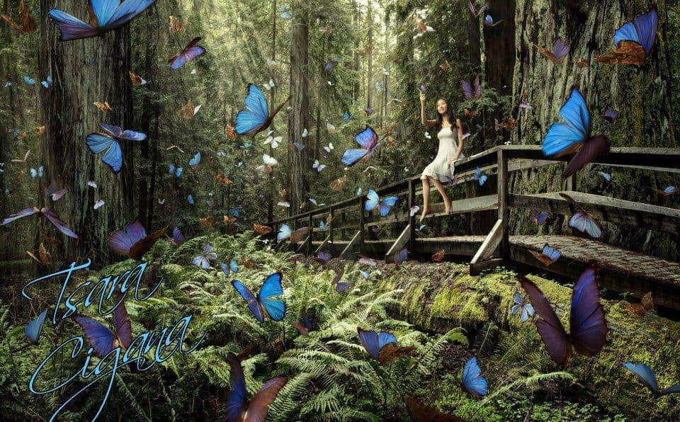 borboletas-01