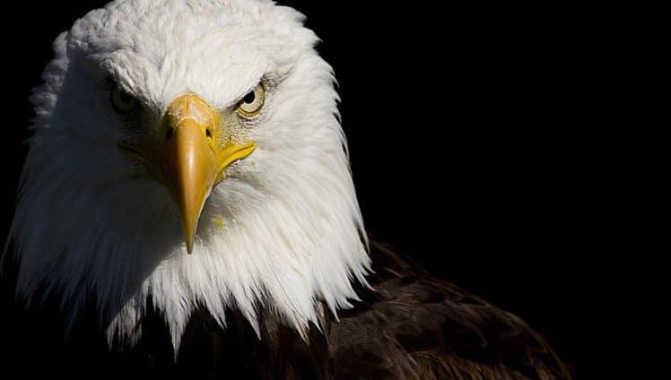 assim-como-a-aguia-capa