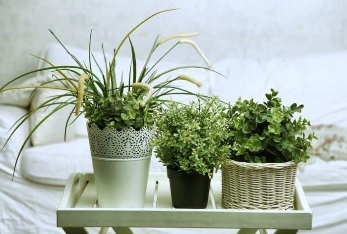 4 plantas para o quarto2