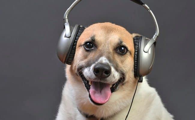 esta música deixa os cães