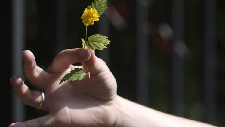 O sentimento de gratidão é tão poderoso que possibilita rápidas e fantásticas mudanças em sua vida