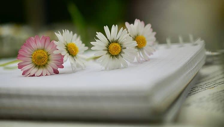 Professora cria caderno de elogios para valorizar autoestima dos alunos 1