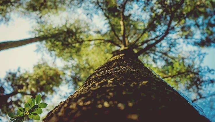 Qualquer árvore que queira tocar os céus precisa ter raízes tão profundas ao ponto de tocar os infernos .