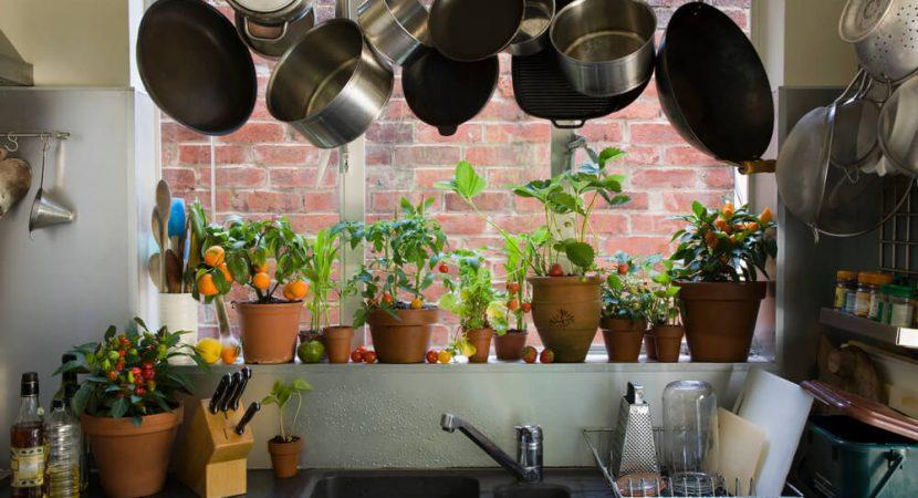 Saiba como ter plantas em casa ajuda a purificar o - Energia negativa in casa ...