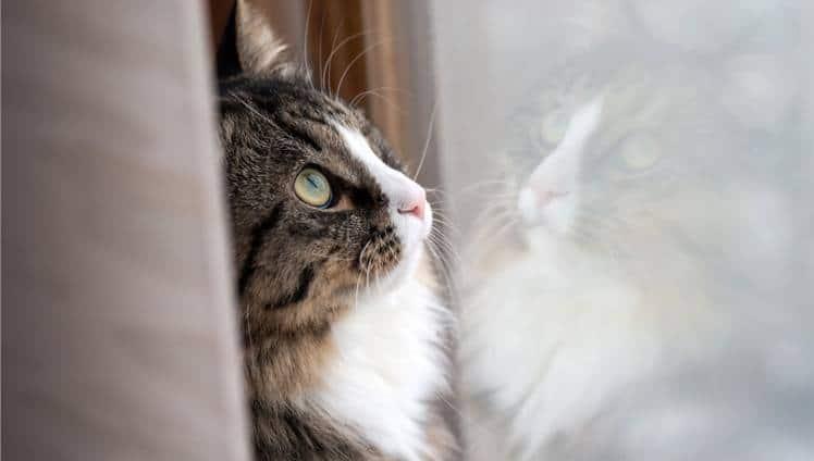 Os gatos noes ensinam