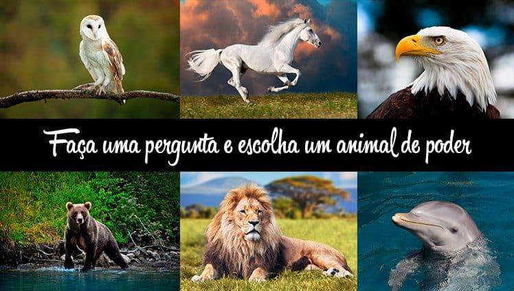 Faça uma pergunta e escolha o seu animal de poder capa