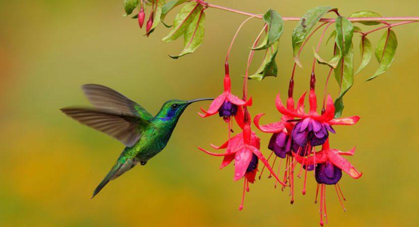 Resultado de imagem para beija flor maravilhoso