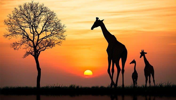 A viagem dos sonhos africa do sul site