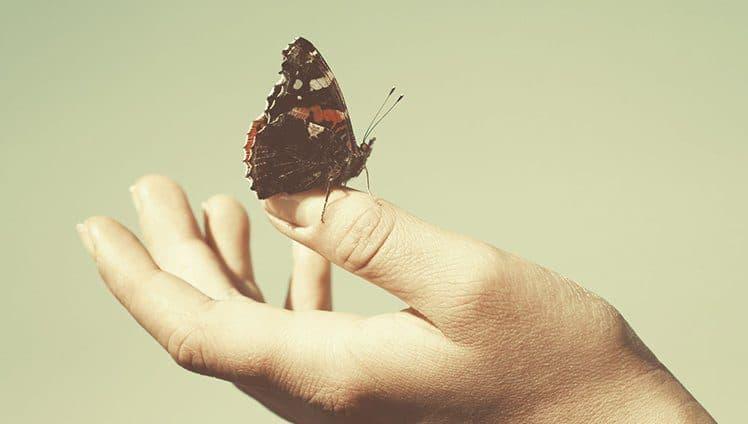 Na vida somos borboletas site