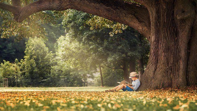 A árvore, a vida e os frutos